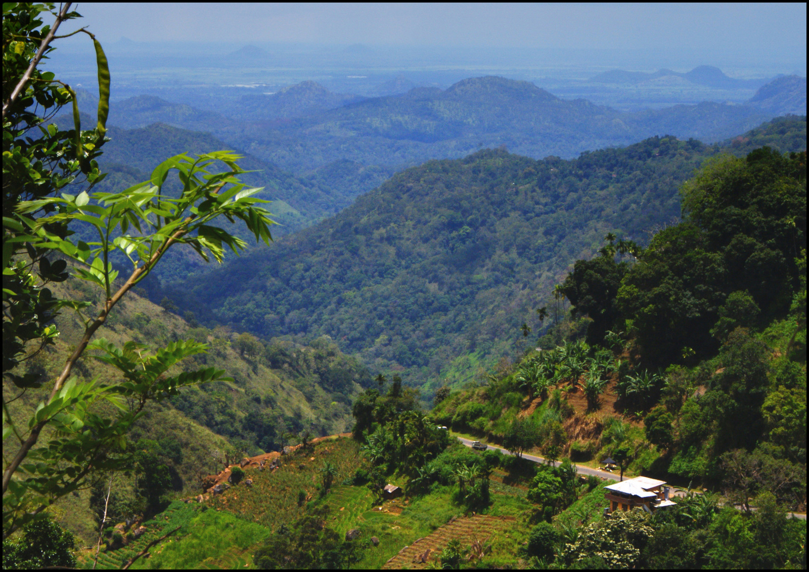 Las monsunowy na Sri Lance