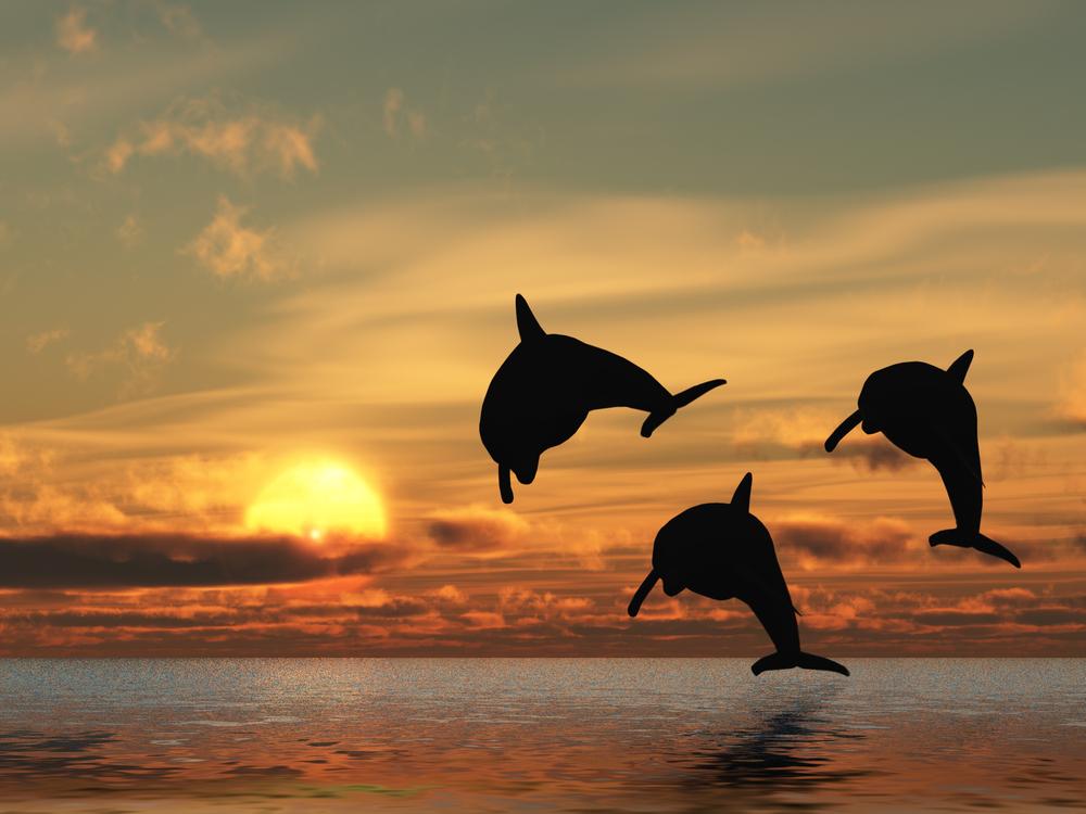 Delfiny na Malediwach