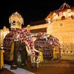 Słonie na fesrtiwalu Esala Perahera
